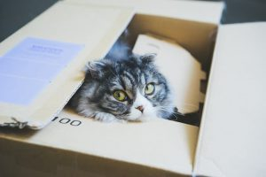 到着を待つ子猫