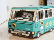 運搬する子猫